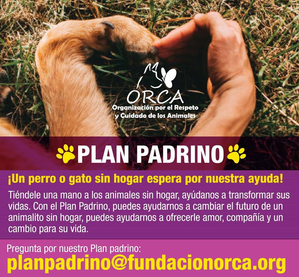 PlanPadrino_719392.jpg