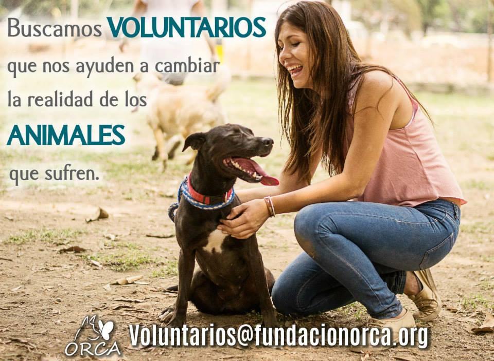 Voluntarios_112959.jpg